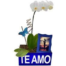 Orquídea Branca Com Amor Para Ele