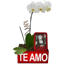 Orquídea Branca Com Amor Para Ela