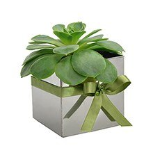 Mini Cubo Metálico & Flor de Pedra