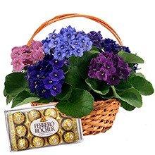 Cesta de Violetas Coloridas e Ferrero Rocher