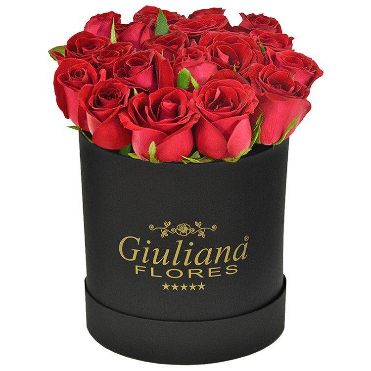 Majestosas Rosas Vermelhas Black