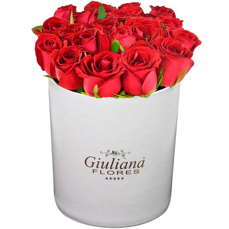 Majestosas Rosas Vermelhas White