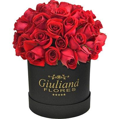 Majestosas Rosas Vermelhas Premium Black