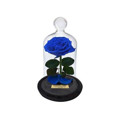 Mini Rosa Encantada Azul