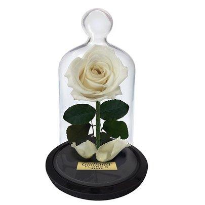 A Rosa Encantada Branca