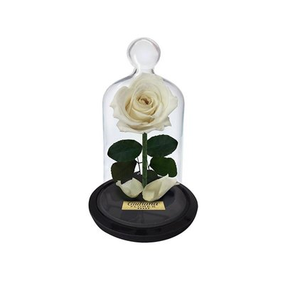 Mini Rosa Encantada Branca