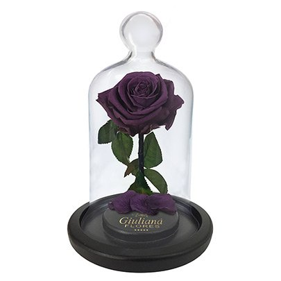 A Rosa Encantada Roxa