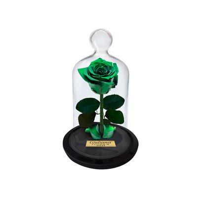 Mini Rosa Encantada Verde
