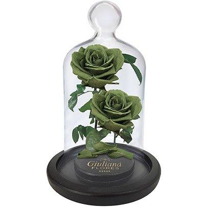 Jardim das Rosas Encantadas Verde