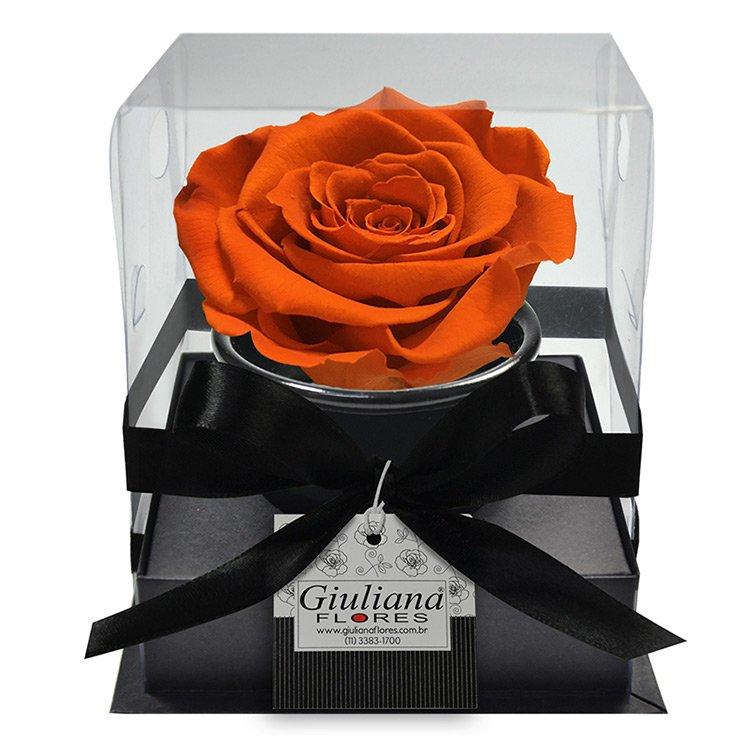 Rosê Preservada Laranja Claro