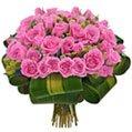 Reconquista de Rosas Lilás
