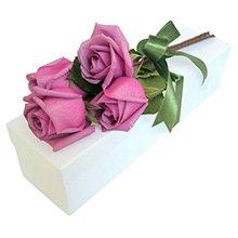 Paixão de Rosas Colombianas Lilás