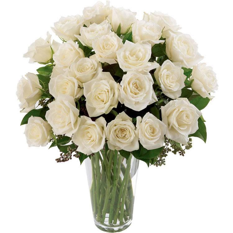 Soneto 36 Rosas Brancas no Vaso