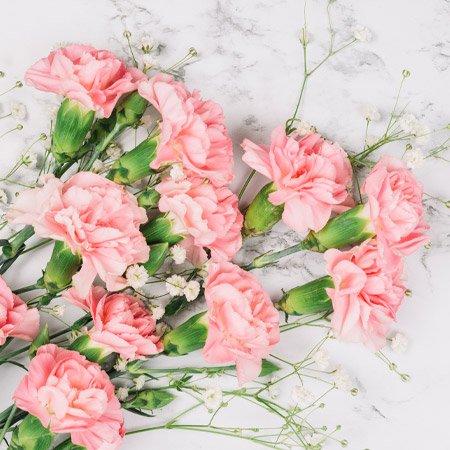Arranjo de Cravo Cor de Rosa Para presete