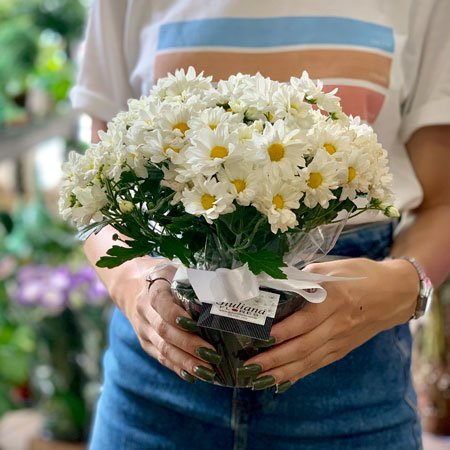 Flores Plantadas para Presente