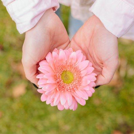 Foto Gérbera a flor da alegria e simplicidade