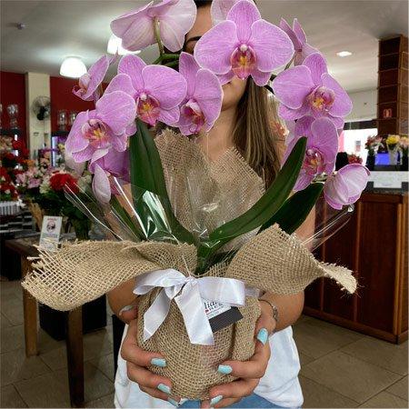 Orquídea Lilás para presente