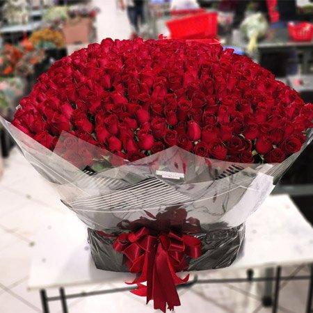 Buquê com 500 rosas vermelhas