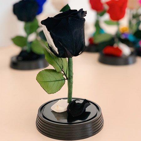 Rosa preta encantada sem cúpula