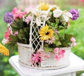 Dicas de conservação das Flores Plantadas