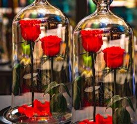 Dicas de conservação das Rosa Encantada