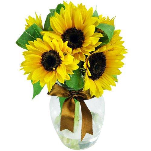 Surpresa de girassóis no vaso flores dia dos pais