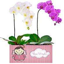 Bem Vinda com Orquídeas Pink e Branca
