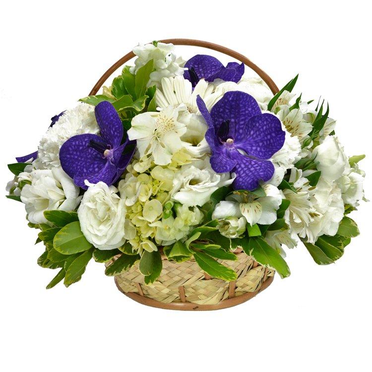 Jardim Encanto de Flores
