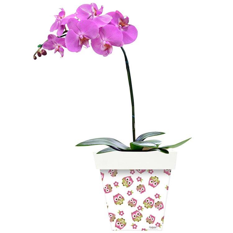Phalaenópsis Pink e Corujinhas
