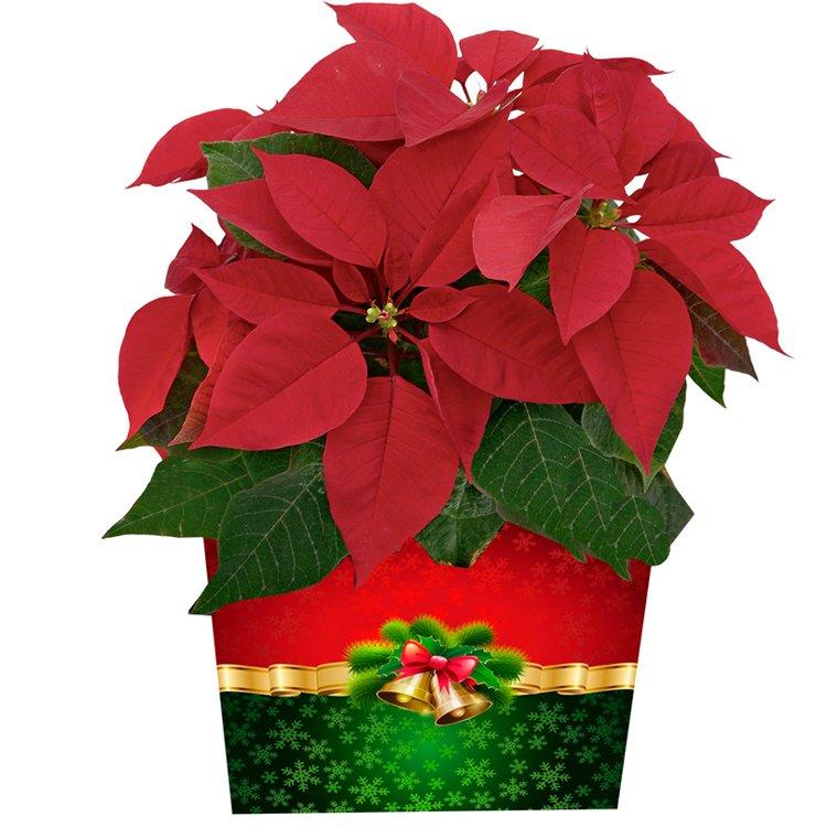 Tradição de Natal