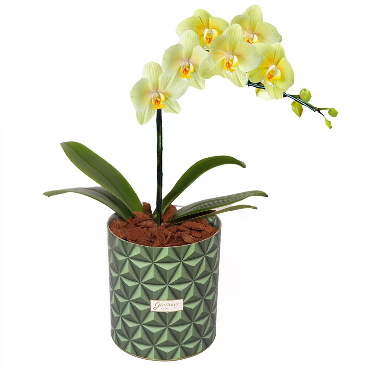 Glamurosas Orquídeas Amarelas