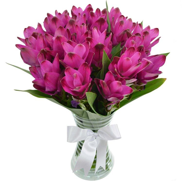 Luxuosas Curcumas Purple no Vaso