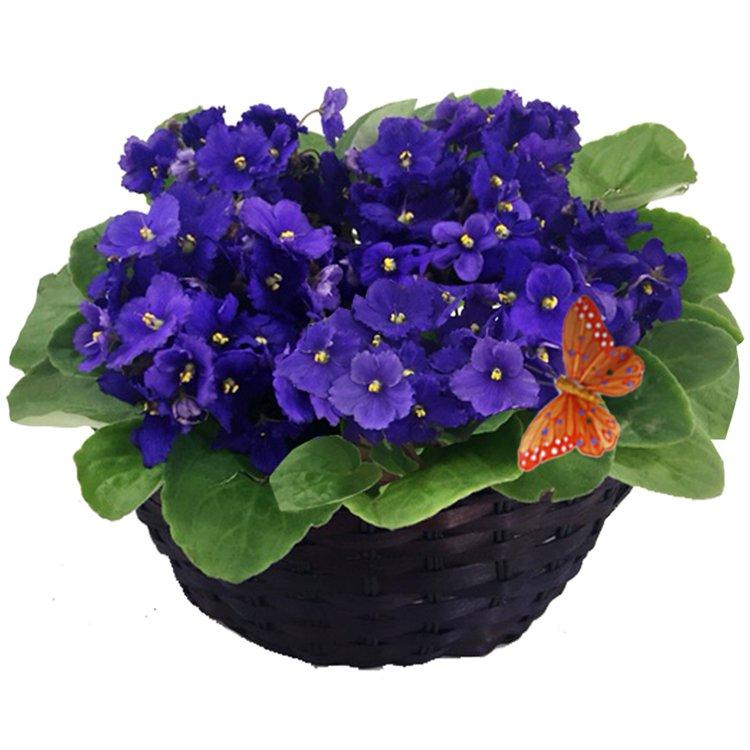 Jardim de Violetas Roxas