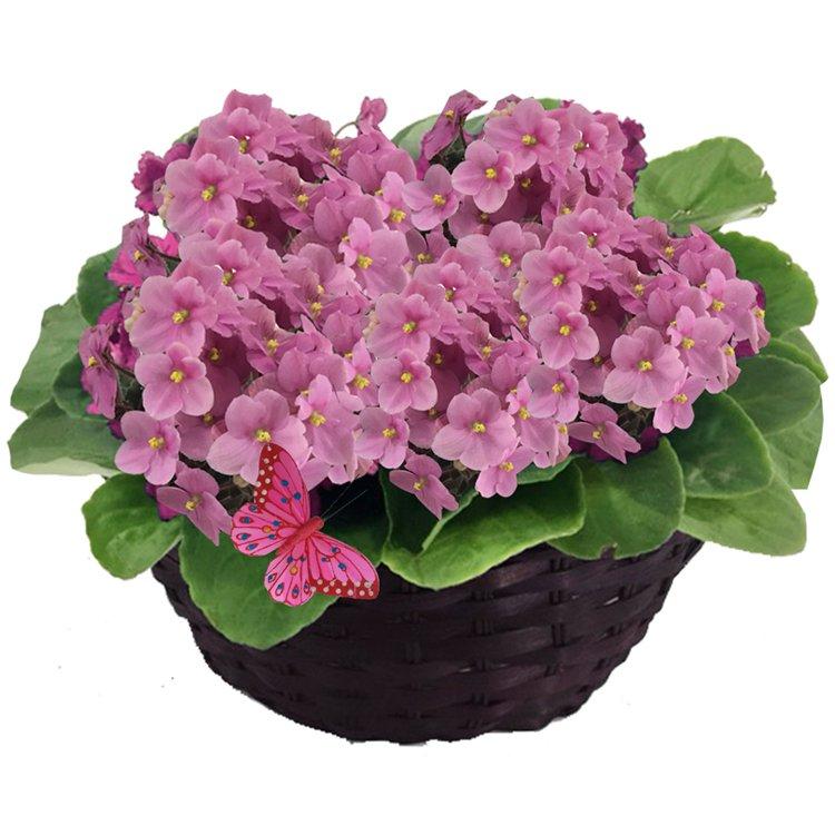 Jardim de Violetas Rosas