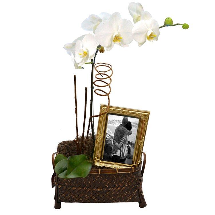 Orquídea Branca Encanto