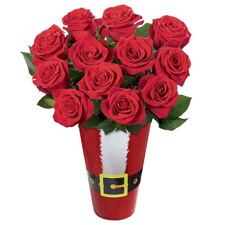 Rosas do Papai Noel