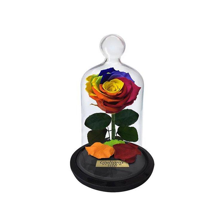 Mini Rosa Encantada Arco-Íris