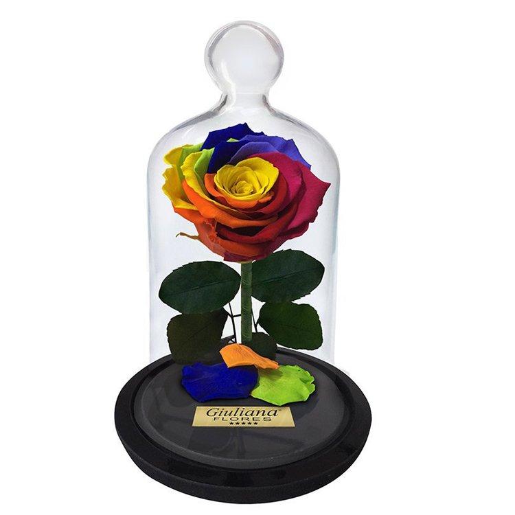 A Rosa Encantada Arco-Íris