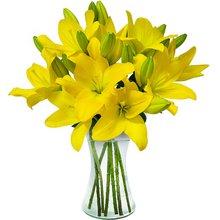 flores de verão: Lindos Lírios Amarelos