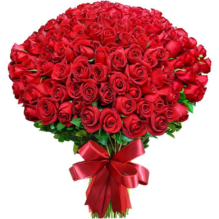Mega Buquê de 200 Rosas Colombianas Vermelhas