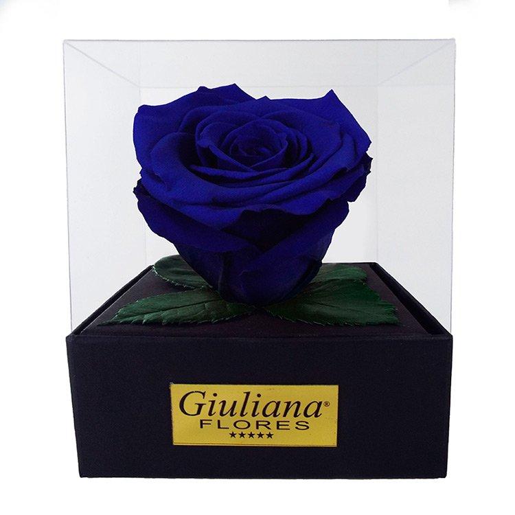 Rosê Encantada Azul Escura