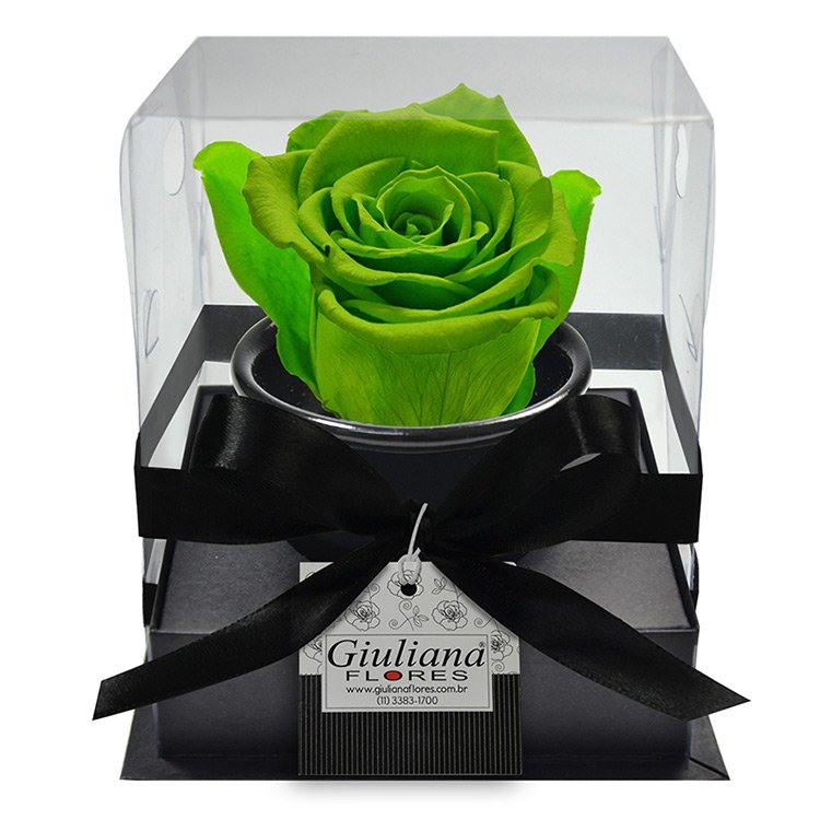 Rosê Preservada Verde Clara