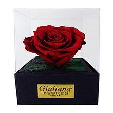 Rosas Preservadas De Beleza Duradoura Giuliana Flores