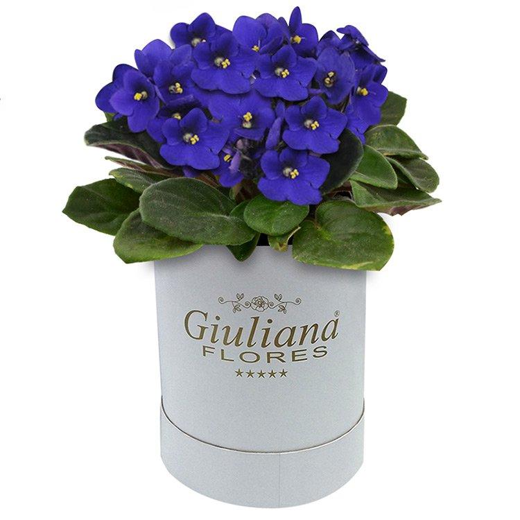 Encanto das Violetas Lilás Giuliana Flores