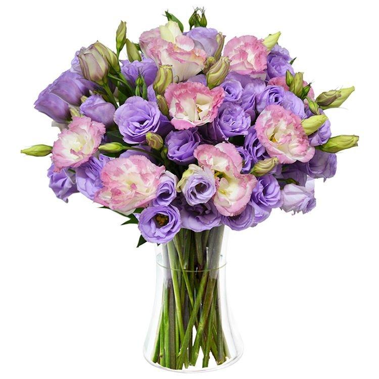Lisianthus Lilás e Rosa no Vaso