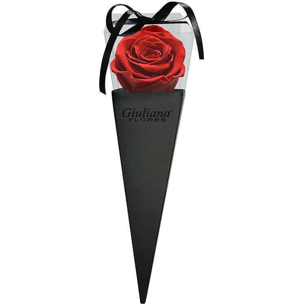 Cone Preto de Rosa Preservada