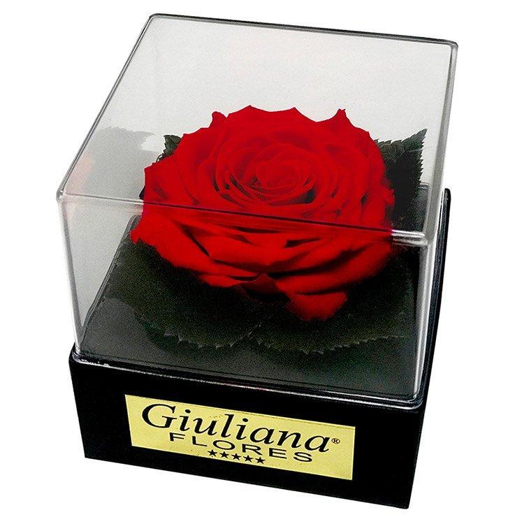 Caixa Acrílica com Rosa Preservada Vermelha
