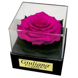 Caixa Acetato com Rosa Encantada Pink