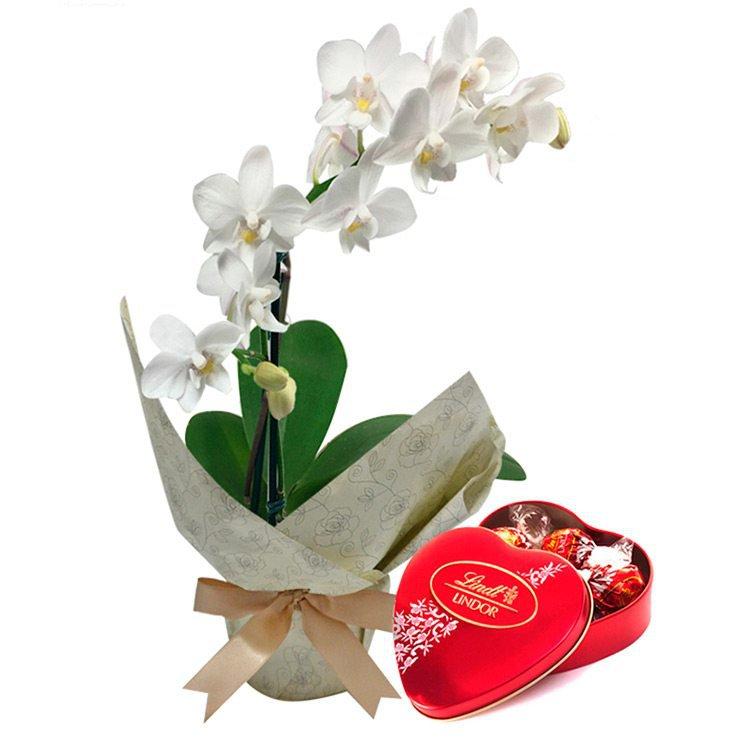 Mini Orquídea Rara & Lindt