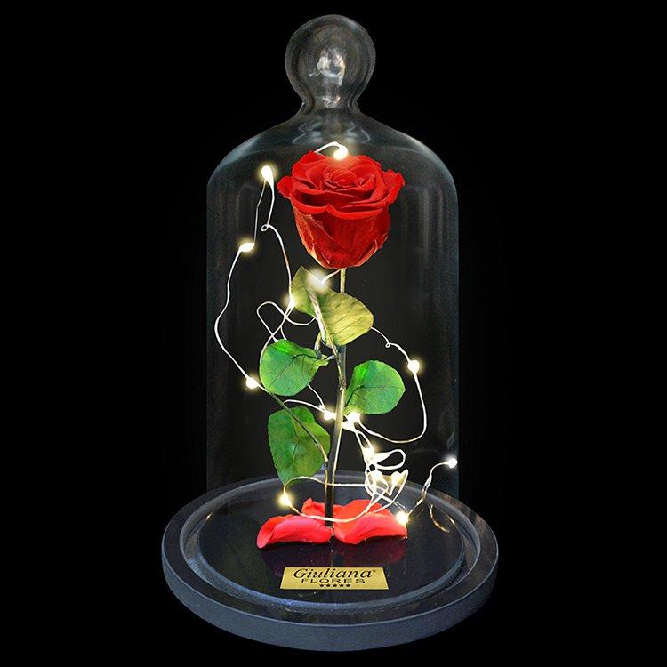 Rosa Encantada Stars Vermelha